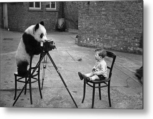 Child Metal Print featuring the photograph Panda Photo by Bert Hardy