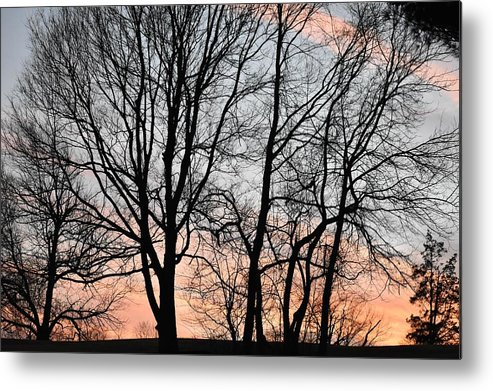 Trees Metal Print featuring the photograph Pink Sky by Cassidy Marshall