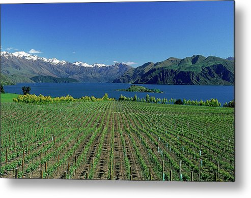 Snow Metal Print featuring the photograph Rippon Vineyard & Lake Wanaka, South by Robin Smith