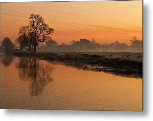 Scenics Metal Print featuring the photograph Sheep Sunrise by Paulscreen