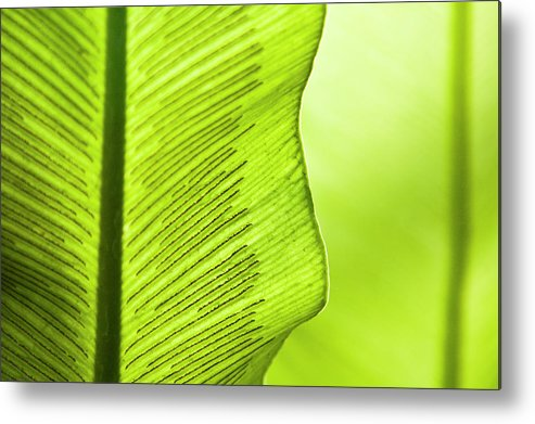 Outdoors Metal Print featuring the photograph Spores Of A Fern by By Ken Ilio
