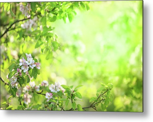 Grass Metal Print featuring the photograph Spring Flowers Blooming Orchard - by Konradlew