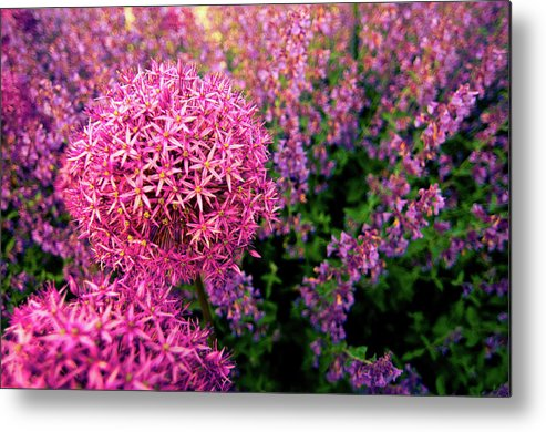 Purple Metal Print featuring the photograph Spring Flowers In Garden by Flash Parker