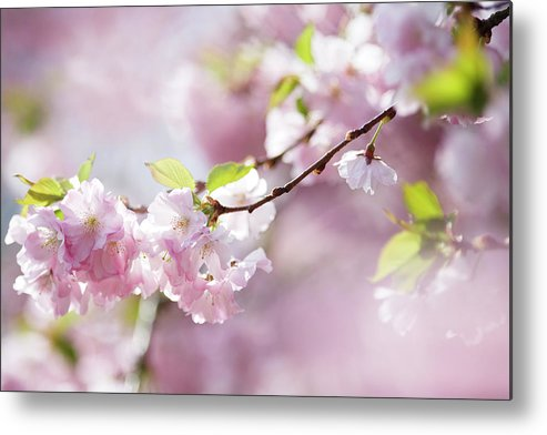 People Metal Print featuring the photograph Spring by Goldhafen
