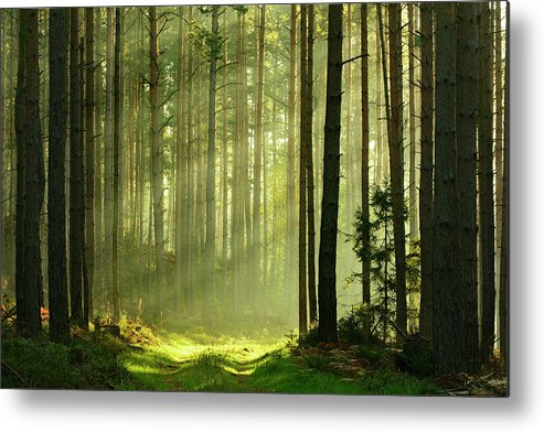 Scenics Metal Print featuring the photograph Sunbeams Breaking Through Pine Tree by Avtg