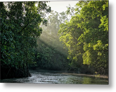 Tropical Rainforest Metal Print featuring the photograph Sunlight Shining Through Trees On River by Brasil2