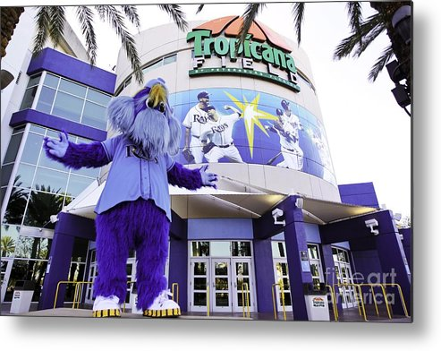 tampa bay rays mascot metal print by mlb photos mlb photo store