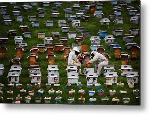 Beekeeper Metal Print featuring the photograph The Beekeepers by Niyazi Gürgen
