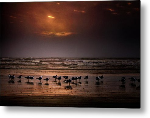 Water's Edge Metal Print featuring the photograph Theres Gotta Be Food Around Here by Dean Fikar