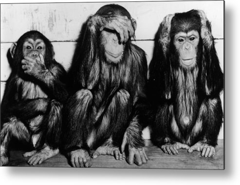 Hiding Metal Print featuring the photograph Three Wise Monkeys by Keystone