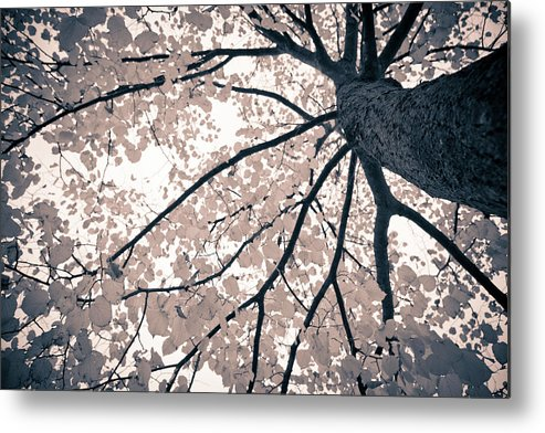 Spray Metal Print featuring the photograph Tree Branches by Gianlucabartoli