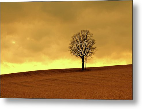 Scenics Metal Print featuring the photograph Tree On Hillside At Dusk Sepia by Driftless Studio