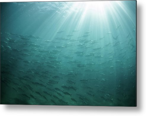 Freedom Metal Print featuring the photograph Underwater Light by Mark Tipple