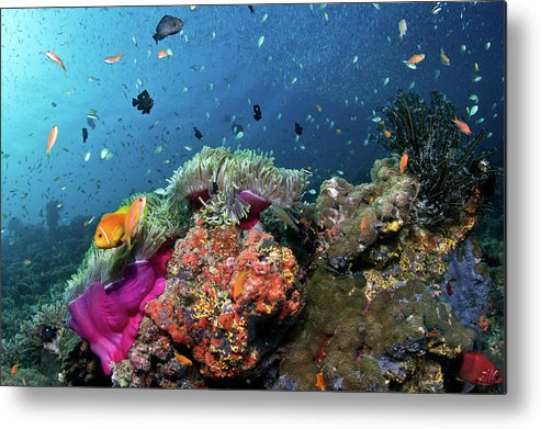 Underwater Metal Print featuring the photograph Vibrant Lives by Lea Lee