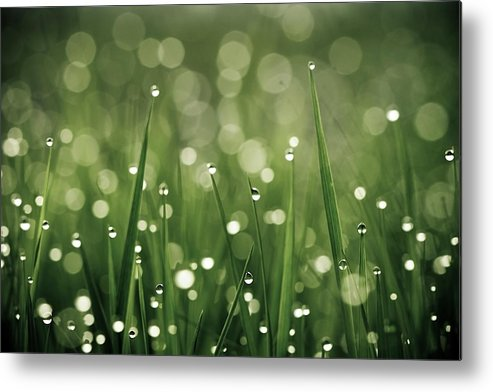 Grass Metal Print featuring the photograph Water Drops On Grass by Florence Barreau