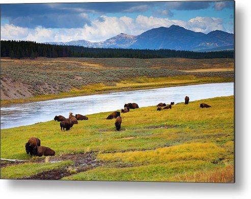 Scenics Metal Print featuring the photograph Wild Bison Roam Free Beneath Mountains by Jamesbrey