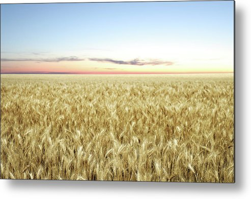 Scenics Metal Print featuring the photograph Xxl Wheat Field Twilight by Sharply done