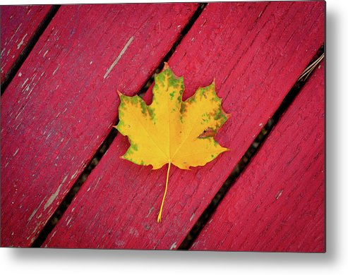 Outdoors Metal Print featuring the photograph Yellow Maple Leaf Against A Red Deck by Photo By Sam Scholes