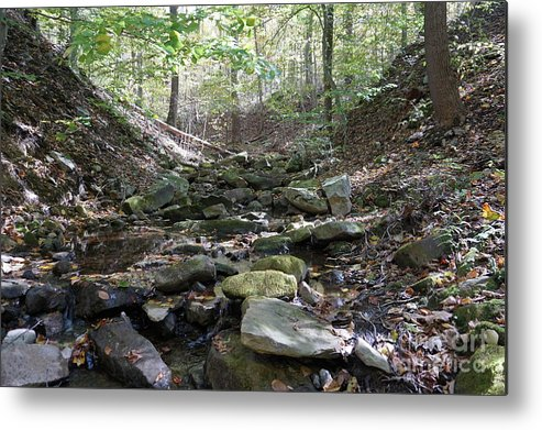 Fall Foliage Metal Print featuring the photograph Bark Rocks 6 by Chris Naggy