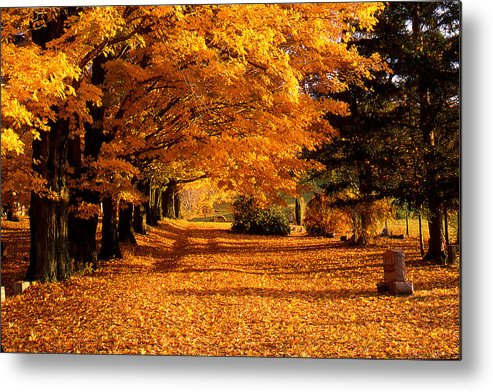 Fall Metal Print featuring the photograph Blazing Autumn Oaks by Roger Soule