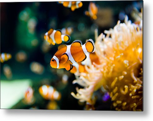 Underwater Metal Print featuring the photograph Clownfish by RapidEye