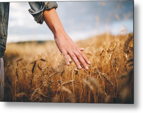 Child Metal Print featuring the photograph Golden wheat fields by FluxFactory