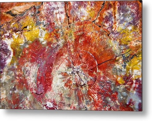 Petrified Wood Stone Texture Abstract Color Skip Hunt Metal Print featuring the photograph Painted Desert Wood 1 by Skip Hunt