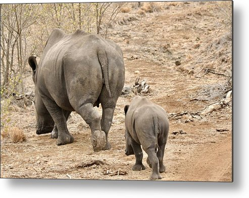 Animal Themes Metal Print featuring the photograph Rhino Pair Leaving by Jeff R Clow