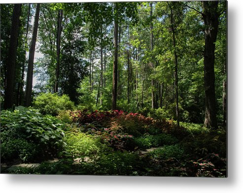 Arkansas Metal Print featuring the photograph Sunlit Garden by Lea Rhea Photography