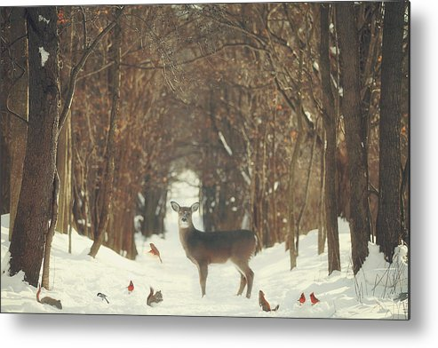 Snow Metal Print featuring the photograph The Forest of Snow White by Carrie Ann Grippo-Pike
