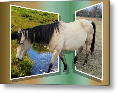 Horse Metal Print featuring the photograph The Grass Is Always Greener On The Other Side by Shane Bechler