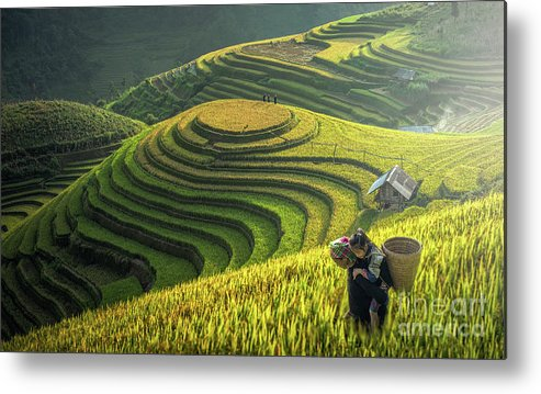 Toughness Metal Print featuring the photograph Mother And Dauther Hmong, Working by Std