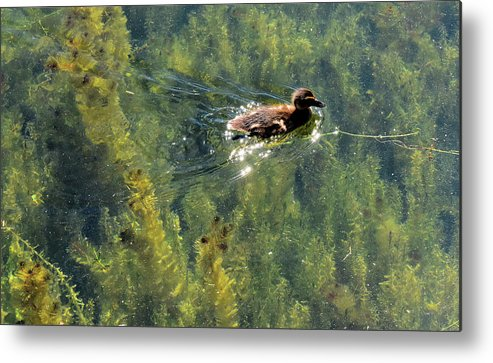 Abstract Metal Print featuring the photograph Duckling Swimming Above The Weeds by Lyle Crump
