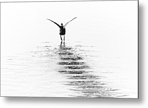 Nature Metal Print featuring the photograph Fly Away by Steve DaPonte