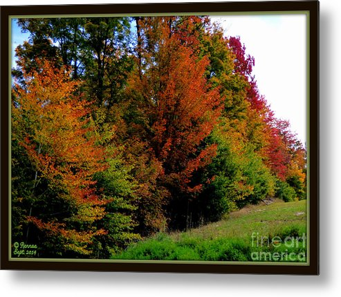 Fall Colors Metal Print featuring the photograph Autumn by Rennae Christman