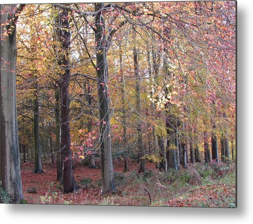 Trees Metal Print featuring the photograph Cannock Chase by Joyce Woodhouse