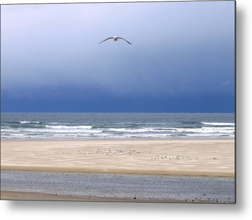 Incoming Seagull Metal Print featuring the photograph Incoming Seagull by Will Borden