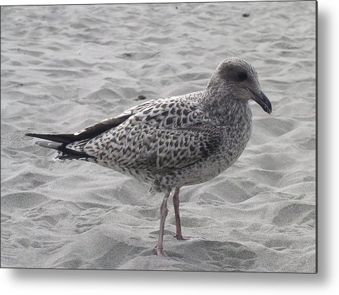 Seagulls Metal Print featuring the photograph Lonely by Valerie Josi