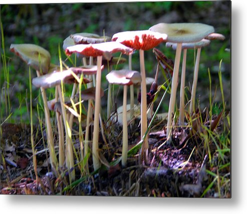 Mushrooms Metal Print featuring the photograph Mushrooms in Sunlight by John Lautermilch