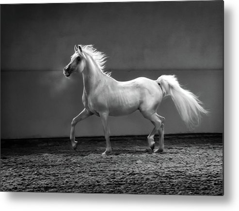 Horse Metal Print featuring the photograph Proud Arabian Horse - Stallion In by Kerrick