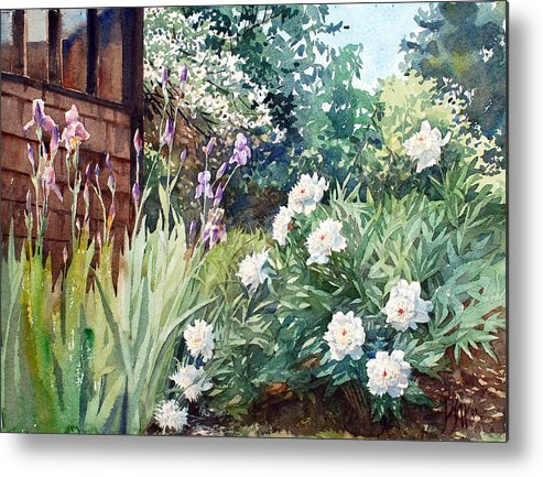 Peter Sit Watercolor Metal Print featuring the painting Oxenden Peonies by Peter Sit