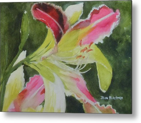 Daylily Metal Print featuring the painting Daylily Study 1 by Jean Blackmer