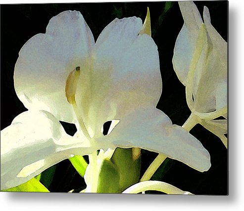 Ginger Metal Print featuring the photograph Fragrant White Ginger by James Temple