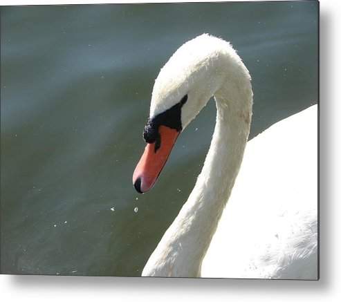 Wildlife Metal Print featuring the photograph Goose on the lake by Cheryl Viar