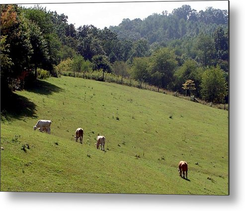 Nature Metal Print featuring the photograph Hillside Grazing by Cumberland Studios