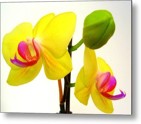 Pair Of Yellow Orchids Metal Print featuring the photograph Pair of Yellow Orchids by Beth Akerman