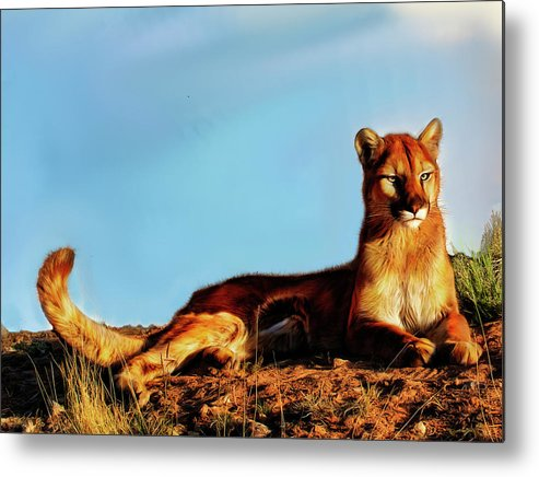 Lion Metal Print featuring the photograph Relaxing in the sun by Roy Nierdieck