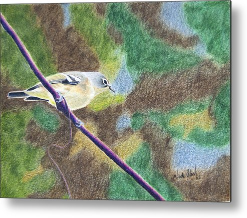 Birds Metal Print featuring the painting Solitary vireo by Wade Clark