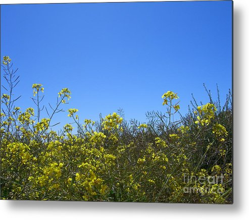 Flowers Metal Print featuring the photograph Vista Flores by Jim Thomson