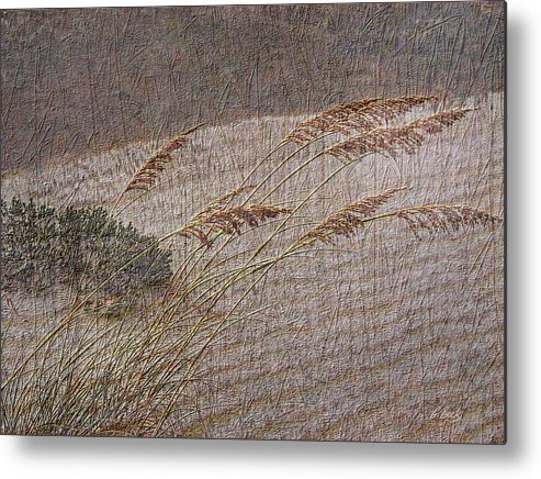 Beach Sea Oats Sand Botany Botanical Stormy Windy Gordon Beck Art Metal Print featuring the photograph Windswept by Gordon Beck